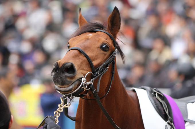 綺麗だった馬かっこ良かった馬可愛かった馬 競馬2chまとめ